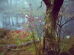 Herbst (cesp-one) Tags: ilz passau hals herbst