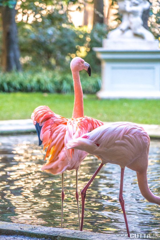 The world 39 s best photos of flamingo and flamingos flickr for Villa fenicotteri milano