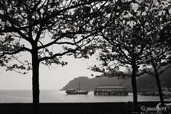 A Pier In The Trees (yualbert) Tags: fuji fujifilm x100 100f photography snapshot candid street hongkong blackandwhite bw monochrome boat water sea tree landscape city people silhouette