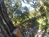 G0121241 (harleyhurricane1) Tags: line zip zipline ziplinepark dadecityflorida treehoppers centralflorida largestziplineparkincentralfl dadecity