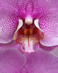 Fuschia close up (sherri_lynn) Tags: orchids gardens plants flowers botanicalgarden pink