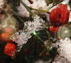 Sun ray trapped in a melting snow (elnina999) Tags: cold winter light structure sunlight frost ice reflection freeze frozen colorful christmas lighting bubble closeup iced ball berries icicles branch snow snowcrystals samsungs6 mobilephotography phonephotography