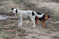 State all'erta (STE) Tags: inverno winter cane cani dog dogs