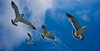 Japan 2008 (peter samuelson) Tags: resor japan birds tokyo mountfuji fishmarket travel seagull eagle fåglar japan2008juni seagulls nightview waterfront