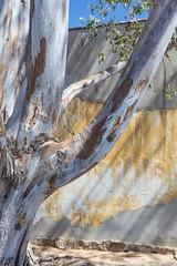 4Y4A0990 (francois f swanepoel) Tags: abandonedspaces abode architechture clanwilliam corrugatediron eucalyptus haikyo karoo mudbricks nardouwsberg ochre oker openspaces strains structures westerncape theweeknd stratification