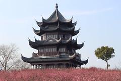 Shanghai, China - Sunday, March 4, 3:26 PM (kyonoshashin) Tags: shanghai china haiwan nationalforestpark pavillion plumblossoms flowers bluesky spring 上海 中国 花 青空 春