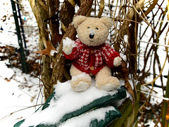 Can We Have a Snowball Battle, Mama?! (BKHagar *Kim*) Tags: bkhagar htbt teddy bear teddybear mitchell snow snowball cold athens al alabama
