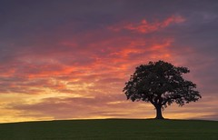 Finding Solace (Captain Nikon) Tags: melbourne derbyshire england parish village greatbritain uk landscapephotography landscapes lonesometree lonetree sunset naturalbeauty ruleofthirds solace