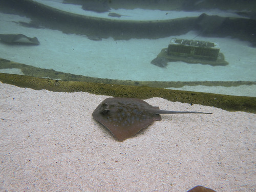 Sea World Stingray Tank