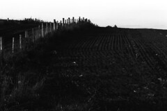 Farm Field with Fence and Posts (pmvarsa) Tags: fall autumn 2017 analog film 35mm 135 ferrania ferraniap30alpha p30 panchromatic canon ftb classic camera nikonsupercoolscan9000ed nikon coolscan outside cans2s outdoors contrast farm rural agriculture fence posts hill country lane hawkesville ontario canada