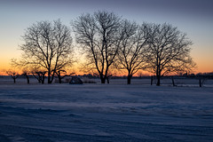 frozen grove (Christian Collins) Tags: canoneos5dmarkiv ef24105mmf4lisusm baycounty michigan mi midland flajole road frosty cold belowfreezing trees grove grapes arbor morning amanecer january enero frozen silhouette baren field campo
