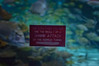 01.05.2018 Ripley's Aquarium of the Smokies (TheWeltyFamily) Tags: 2018 gatlinburg january tennessee theweltyfamily ripleysaquariumofthesmokies tank tunnel shark sign attack smokies