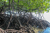 Blue Forests of Lembongan (blue.forests) Tags: seagrass mangroves indonesia lembongan blue forests aerial roots mangrove habitat ecosystem coastal fieldwork boat mud crabs beach