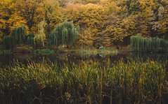 Autumn dream (Ani ♠ Melikyan) Tags: autumn ukraine ukrainenature animelikyan animelikyanphotography yellow green lake