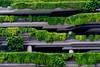 18015148 (felipe bosolito) Tags: modernarchitecture architecture green concrete grey singapore fuji xpro2 xf1655 velvia