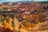 hoodoos from sunrise point - Bryce Canyon NP, Utah, USA (Russell Scott Images) Tags: brycecanyonnationalpark utah usa sunrisepoint hoodoos amphitheater russellscottimages