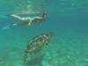 So peaceful and tall (Peter_069) Tags: tauchen diving scuba malediven maldives äqypten egypt wasser water underwater unterwasser padi fische fisch fish shellfish muscheln moräne moränen moraine batfish fledermausfisch koralle korallen coral nemo clownfisch clownfish boot boat vessel blaueswasser bluewater