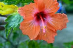 WOL Calauan Laguna Philippines Day 1 (121) (Beadmanhere) Tags: philippines flowers