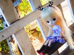 Dee(a)r girl ♥ (Pliash) Tags: dal doll cute kawaii magical pink chan deer pullip groove family asian japanese fashion dolls