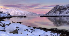 Golden afternoon on Grøtfjord, Norway (AdelheidS Photography) Tags: norway norge noorwegen noruega northnorway norvege norvegia nordic norden adelheidsphotography adelheidspictures adelheidsmitt winter troms kvaløy scandinavia tromsø tromvik grøtfjord fjord goldenhour mountains coastline pink sea landscape scenery scenic view canoneos6d canonf4l2470mm snow