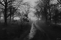 (Mr. Tailwagger) Tags: graveyard fog mist sudbury ma leica tailwagger summilux 50mm black chrome m10 ice dirt
