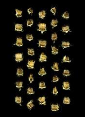 58770.01 Inula helenium (horticultural art) Tags: horticulturalart inulahelenium inula cutflowers grid