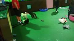 21369447_10213821396356035_3826414389767170292_n (natedetienne) Tags: ash tibetan mastiff puppy tm