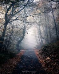 #039 Forest Rays 2017 (Enrico Boggia   Photography) Tags: wood bosco foresta nebbia mistic fog arosio altomalcantone enricoboggia 2017 novembre