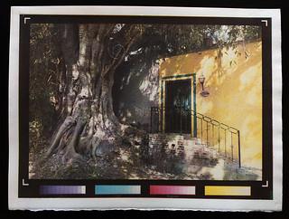 GreenDoor with Tree Print 2