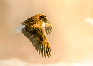 Flying to the sun --- Life of Eagle....!
