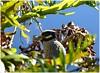 Sawgrass Lake Park - St Petersburg Florid (lagergrenjan) Tags: sawgrass lake park st petersburg florida bird
