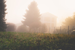 Mistery??? (alex.mitroiu) Tags: fog dense nature low visibility eerie