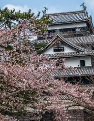 Matsue-Jô (David Hédin) Tags: 2012 matsue chateau chugoku château japon jp