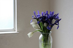 7DWF Window Light (Sarah_ES) Tags: 7dwffriday floral window light white purple iris tulips