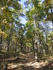 Signal Hill Trail (Mount Magazine State Park, Arkansas) (courthouselover) Tags: arkansas ar logancounty mountmagazine mtmagazine magazinemountain mountmagazinestatepark mtmagazinestatepark signalhill stateparks statehighpoints ouachitamountains landscapes ozarksaintfrancisnationalforest nationalforests unitedstatesforestservice