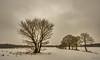 Winter - Bedeckt, . . . Schnee kommt (Pana53) Tags: photographedbypana53 pana53 naturfoto naturundlandschaftsfotografie winterlandschaft winterlandscape felder fields bäume trees schnee snow himmel nordheide wanderung spaziergang kälte outdoor nikon nikond810 baum tree feld field bedeckt