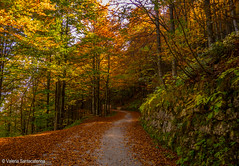 the path (Valeria Santacaterina) Tags: path sentiero paesaggio landscape trees alberi foglie leaves legno woods forest bosco nature
