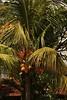 IMG_0363 (Kalina1966) Tags: bali island indonesia palm