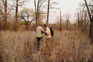 Zimbabwe Cape Buffalo Hunt 80