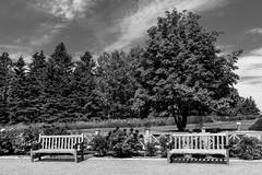 Bas-St-Laurent Métis 102 (Agirard) Tags: bench tree flowers metis garden metisgarden gaspe stlawrence stlaurent batis18 batis zeiss sony a7ii reford