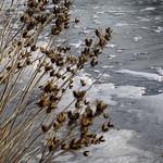 Frozen Lake thumbnail