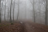 Forest in Mettlach (Nereus[GER]) Tags: forest wald nebel mist fog mystery scenery dark spooky ambient landscape nature canon eos 80d 2470mm f4 is usm lens saarland mettlach nereusger smerlot