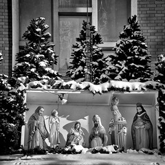 The Unwise Man (Mister Day) Tags: nativity jesus pigeon church snow wise funny comical unwise