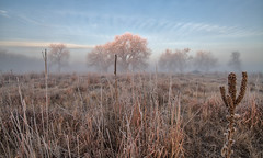 _D851634 (noelfleming) Tags: noel fleming photography colorado co sunrise fog rocky mountain arsenal park wildlife trees landscape inspirational grass frost rockymountainarsenal tree nature countryside cold forest outdoor winter mist beautiful season white morning