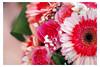 Happy Valentine's day 💗💗💗 (Giorgio Starfish) Tags: macro fiore flower close up valentine day happy rose sunflower love