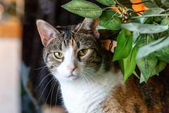 javacatscafe18Feb20180155.jpg (fredstrobel) Tags: javacafecats javacatscafe atlanta places animals ga pets cats usa georgia unitedstates us