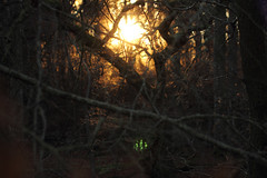 Enchanted (Pog's pix) Tags: enchanted tangle branches sunset light flare willothewisp nature evening outdoors sun wild trees woodland scotland edzell pretty green magical seeds backlight backlit intothelight