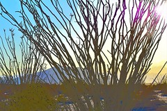Ocotillo (thomasgorman1) Tags: ocotillo cactus sun desert colorized treated effects nikon processed baja mexico landscape