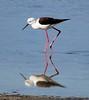 Reflejos (josémigueljaénfernández) Tags: cigüeñuela marisma reflejo reflejos sanfernando cádiz parquenatural parquenaturalbahíacadiz estero salinas
