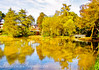 The Colours of the Pond (Francesco Impellizzeri) Tags: tumbridge wells england pond autumn canon landscape trees water reflections